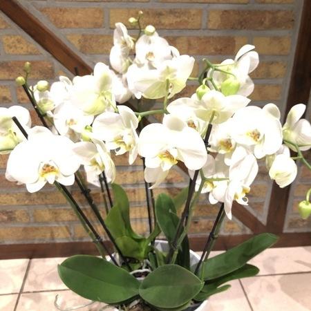 Orchidées 02